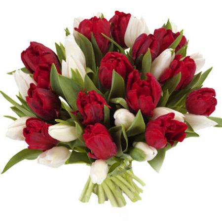 19 sarkanas un baltas tulpes