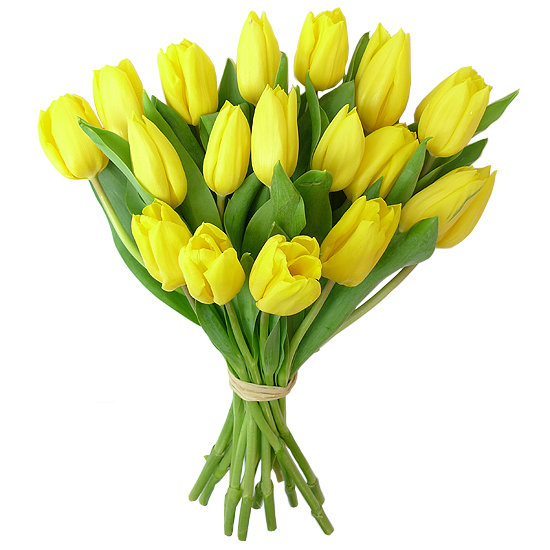 19 dzeltenas tulpes