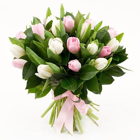19 baltas un rozā tulpes ar zaļumiem