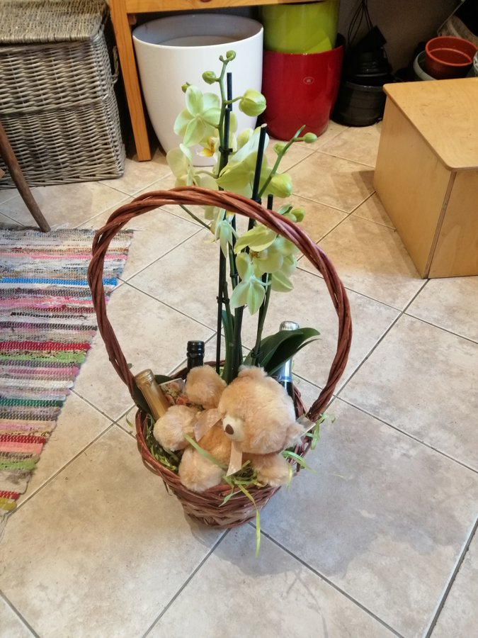 Dāvanu grozs ar orhideju, mīksto rotaļlietu un dzirkstošajiem vīniem 11,5%