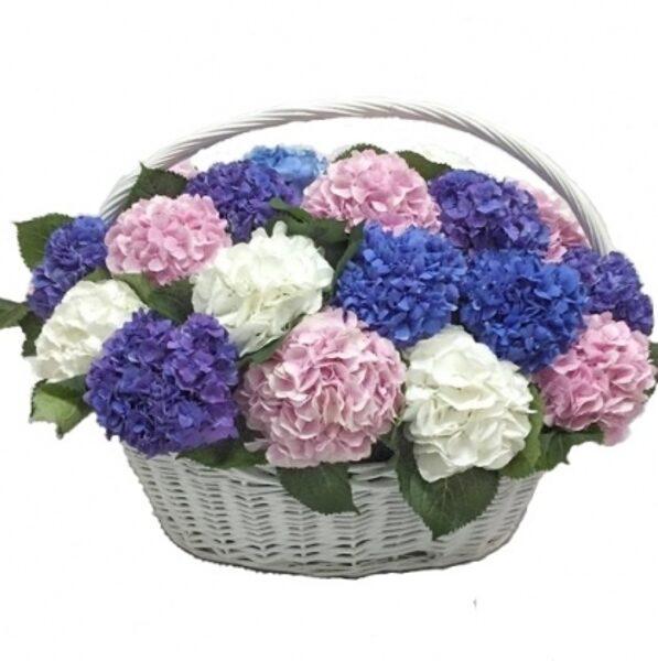 Hortenzijas grozā (skaits pēc izvēles)