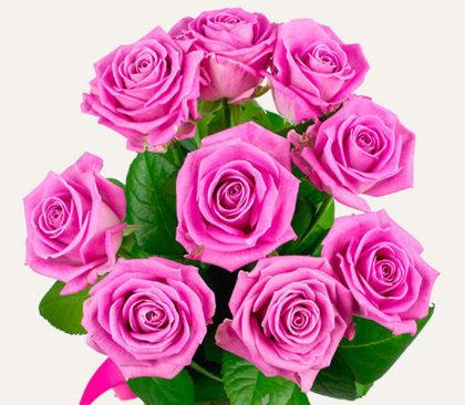 Rozā rozes 40 cm (skaits pēc izvēles)