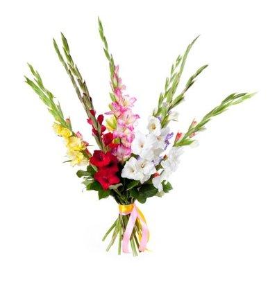 9 dažādu krāsu gladiolas