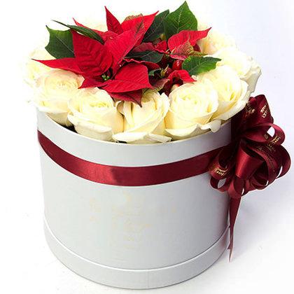 Ziemassvētku zvaigzne (Puansetija) ar baltām rozēm apaļā dāvanu kastē